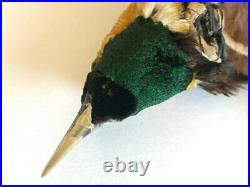 Rare Antique Victorian Taxidermy Millinery Bird Of Paradise