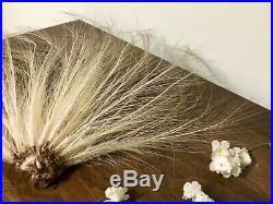 Vintage Millinery Feathers Rare Egret Spread XL Aigrette Feathers Edwardian